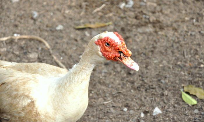 photoblog image quack! quack!!!