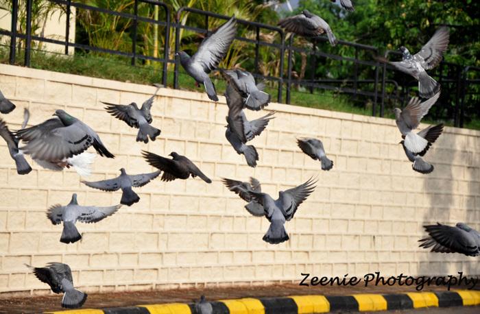 photoblog image As free as a bird