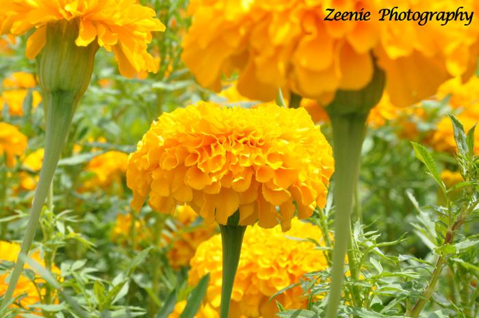 photoblog image the colour yellow