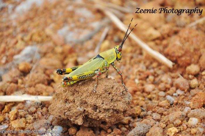 photoblog image Mr Hopper