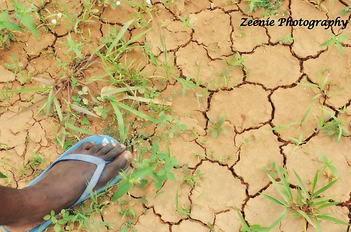 photoblog image the leg and the cracked mud