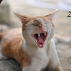 jack's wild yawn