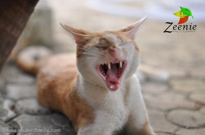 photoblog image jack's wild yawn